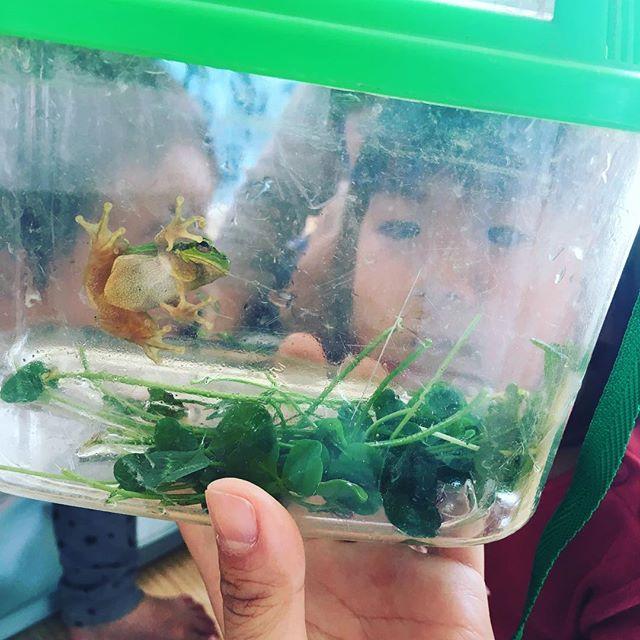カエルが遊びに来たよ︎#カエル#舞多聞もりの保育園#もりの保育園#園長#行き物好き#ちよごろうさん