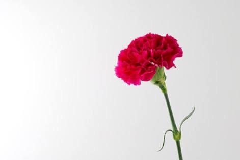 母の日 ️..「ママ、ぼくを生んでくれてありがとう️ママ、わたしを生んでくれてありがとう️」..お子さまがきっとお母様に愛いっぱいにそう伝えていることと思います..母の日製作見たお母さまのことを考えたら...(スタッフ一同ニヤニヤが止まりません🤤️)..#母の日#母の日製作#お母さんありがとう#舞多聞もりの保育園#もりの保育園