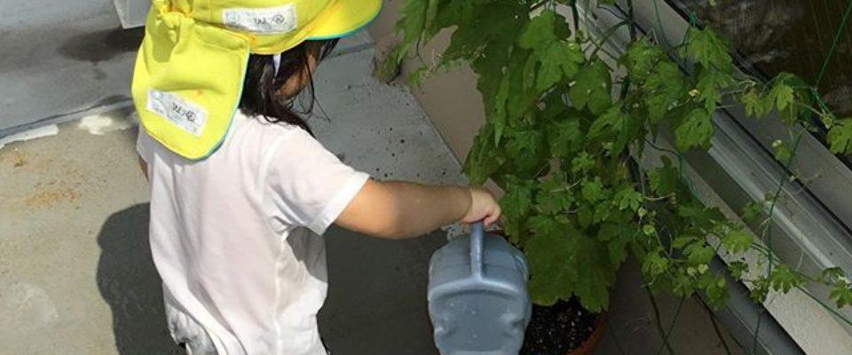 台風が去ってまた暑くなりました。ゴーヤも喉が乾くよね!笑美味しい水をどうぞ️
