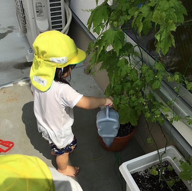台風が去ってまた暑くなりました。ゴーヤも喉が乾くよね!笑美味しい水をどうぞ️ #神戸市#垂水区#舞多聞#もりの保育園#舞多聞100年の杜 #サンウッド株式会社