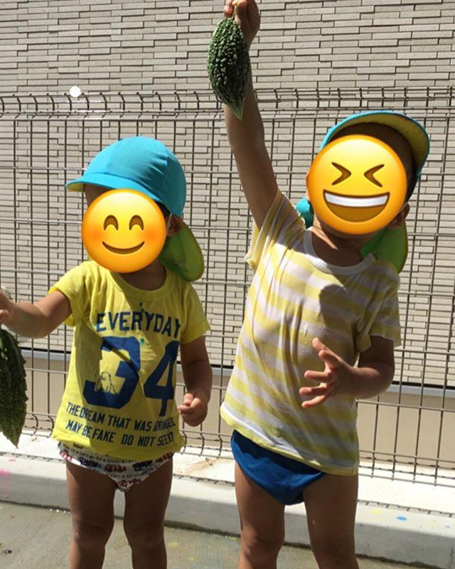 大きなゴーヤを収穫しました!絵の具でのびのびお絵かきしたよ。 #神戸市#垂水区#舞多聞#もりの保育園#舞多聞100年の杜 #サンウッド株式会社